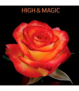 Rose Equat High  et  Magic 60cm x 12