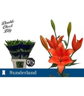 Lys Sunderland