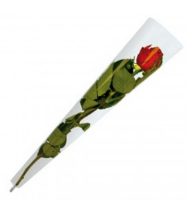 Etui a rose Transp x 50   55 cm