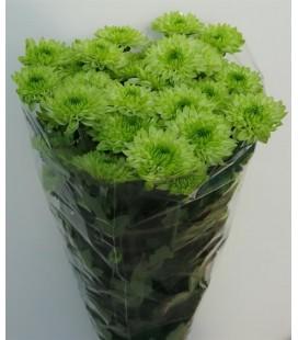 Chrysantheme Avocado 70 cm