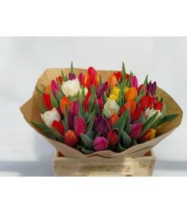 Tulipe mix