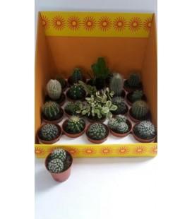 Cactus Mix pot de 5.50