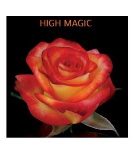 Rose High Magic (Equat) 60 cm x 12