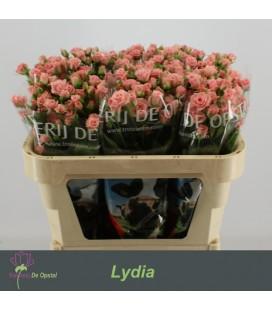 Rose Branchue Lydia 70 cm