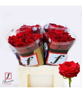 Rose Red Naomie 40 cm