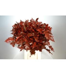Feuille de Chene Rouge 80 cm