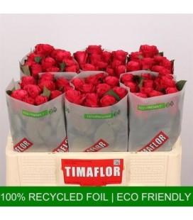 Rose Tacazzi 50 cm