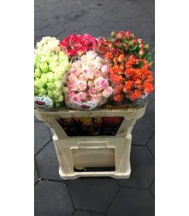 Rose Branchue Mix dans le bac 70 cm