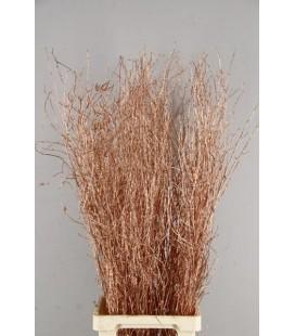 Bouleau Copper+paill 1.20m ( botti)