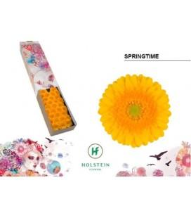 Germini Springtime