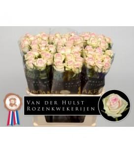 Rose Cupcake 80 cm