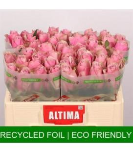 Rose athena royale 50 cm