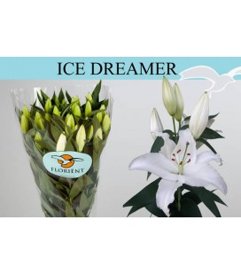 Lys or Ice Dream