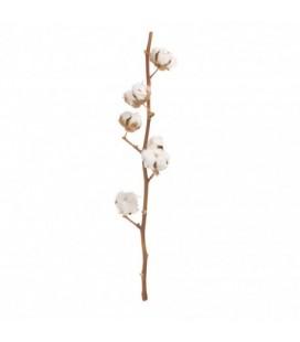 Branche de coton 8 fl 70 cm FS