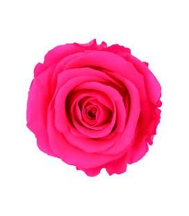 Rose Stab Ø4.5/6 h 55cm Rose Fluo