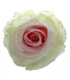 Rose Stab Ø 4.5/6  h 55cm Tricolore