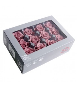 Rose Stab Mini 12 tetes Vieux Rose