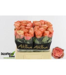 Rose Kahala bb 40 cm