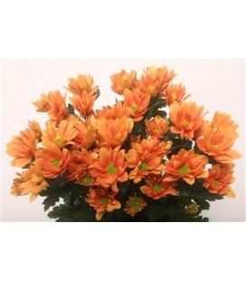 Chrysantheme Grand orange