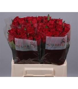 Rose Madame Red 40 cm