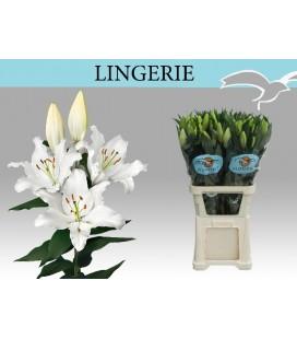 Lys Lingerie