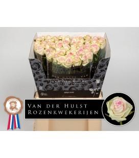 Rose Cupcake 60cm