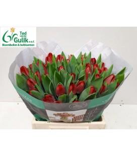 Tulipe Antartic fire