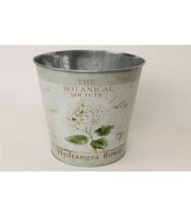 Pot Hydrangea  23.5h22