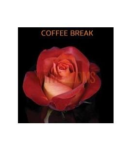 Rose Equateur Coffe Break 50 cm
