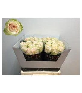 Rose Wedding Rose 60 cm