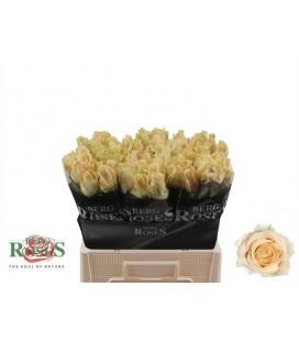 Rose avalanche peach 60 cm petit bo