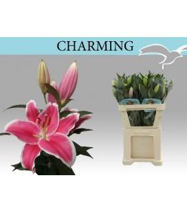 Lys Or Charming 95 cm