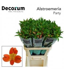 Alstromeria Party