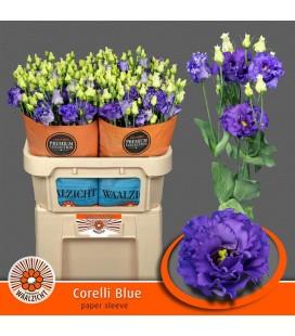 Lisianthus Corelli Blue